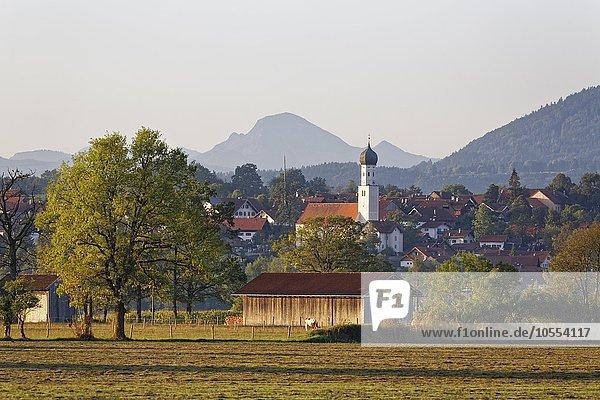 Königsdorf  Oberbayern  Bayern  Deutschland  Europa