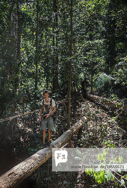 Wanderer  Junger Mann balanciert über einen Baumstamm im Dschungel  Kuala Tahan  Nationalpark Taman Negara  Malaysia  Asien