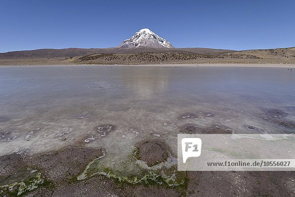Sajama Volcano and frozen lake on Rio Sajama  Sajama National Park  Oruro  border between Bolivia and Chile