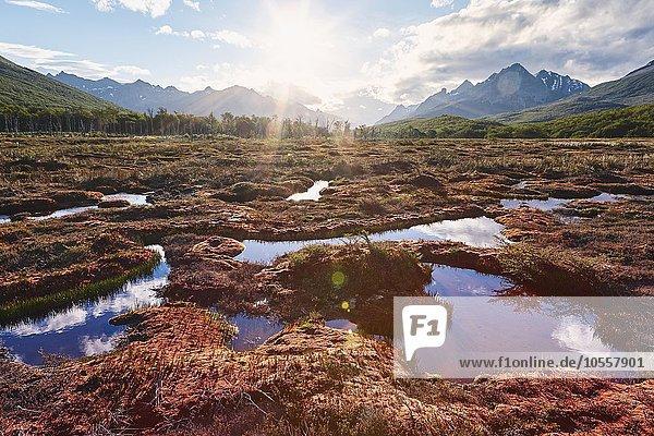 Moorgebiet im Gegenlicht  Tierra del Fuego Nationalpark  Feuerland  Argentinien  Südamerika
