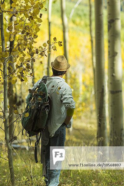 Mann Forschung Wald Herbst