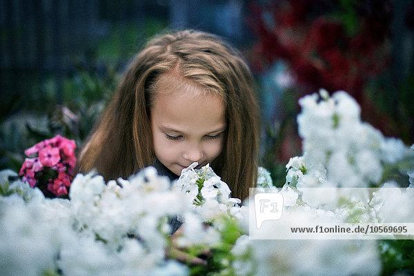 stinken Europäer Blume Garten Mädchen riechen stinken,Europäer,Blume,Garten,Mädchen,riechen
