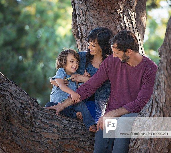 Kleiner Junge mit Mutter und Vater  im Baum sitzend