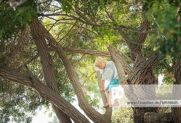 Young boy climbing tree