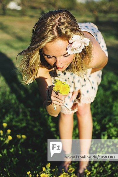 Junge Frau bückt sich über duftende Löwenzahnblüten