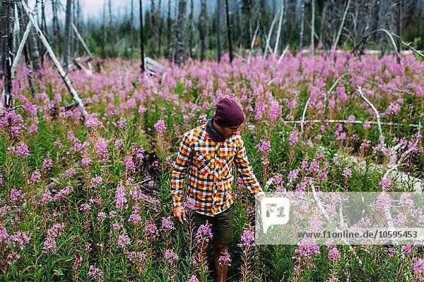 Mittlerer erwachsener Mann mit Karohemd im Feld der Wildblumen  Moränensee  Banff National Park  Alberta Canada