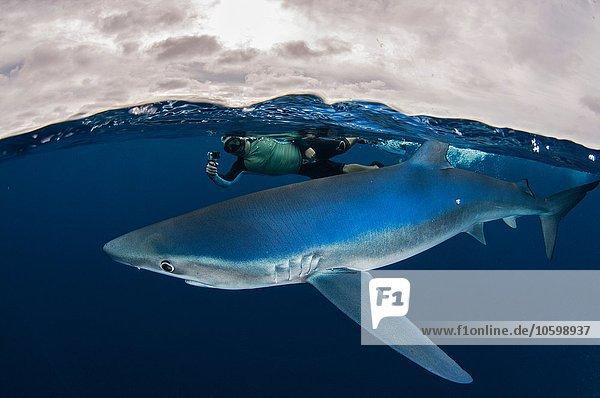 Unterwasseransicht des Schnorchlers mit Kamera beim Schwimmen neben dem Blauhai  Magdalena Bay  Baja California  Mexiko