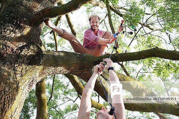 Junge Männer übergeben dekorative Lichter an Freund im Baum bei Sonnenuntergang Park-Party Junge Männer übergeben dekorative Lichter an Freund im Baum bei Sonnenuntergang Park-Party