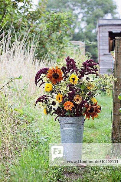 Blumenstrauß im Eimer bei der Gartenparzelle