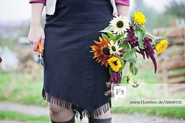 Taille unten Ansicht der Frau  die frische Blumen an der Zuteilung schneidet