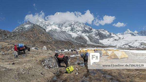 Nepal  Himalaya  Khumbu  Ama Dablam Basislager
