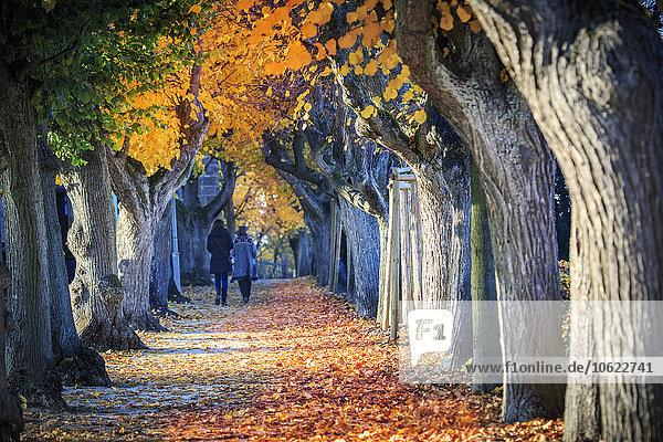 Deutschland  Bamberg  Blick auf die Herbstallee