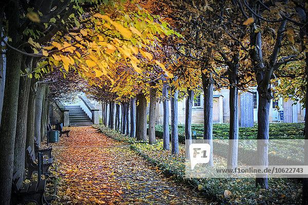 Deutschland  Bamberg  Blick auf den Herbstweg