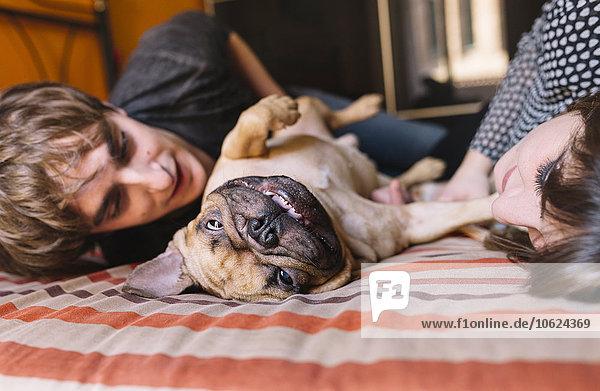 Junges Paar  das zu Hause auf dem Bett liegt und mit seiner französischen Bulldogge spielt.