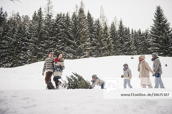 Österreich  Altenmarkt-Zauchensee  zwei Paare und zwei Kinder beim Transport des Weihnachtsbaums durch den Winterwald