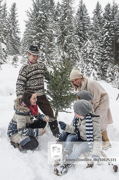Österreich  Altenmarkt-Zauchensee  glückliche Familie mit Weihnachtsbaum im Winterwald
