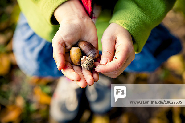 Little girl's hands holding acorns  close-up