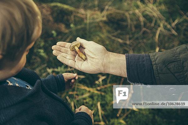 Der reife Mann zeigt dem Jungen den Steinpilz.