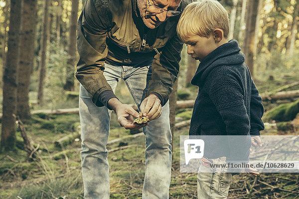 Reifer Mann  der mit einem kleinen Jungen Pilze sammelt.