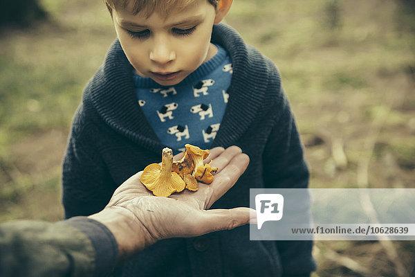 Kleiner Junge schaut auf Pfifferlinge in Männerhand