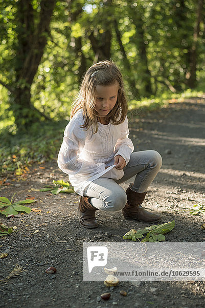 Girl collecting chestnuts on forest track