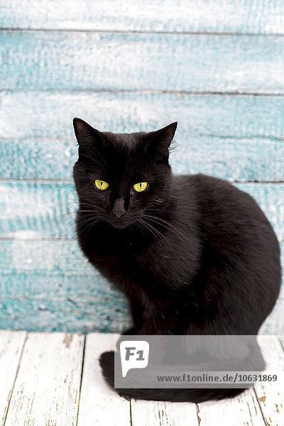 Porträt einer schwarzen Katze vor einer Holzwand sitzend Porträt einer schwarzen Katze vor einer Holzwand sitzend