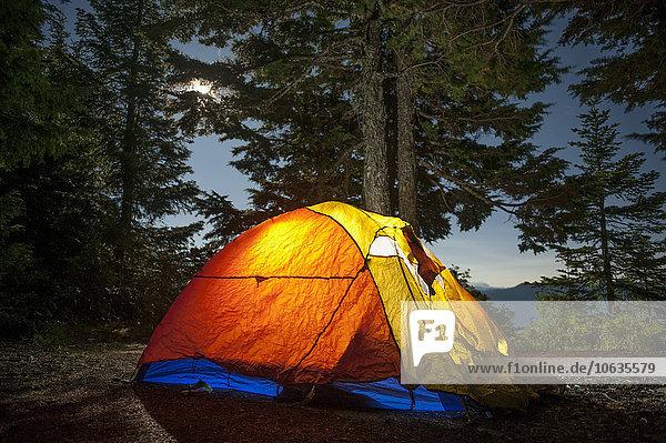 Beleuchtetes Campingzelt gegen Bäume im Wald Beleuchtetes Campingzelt gegen Bäume im Wald