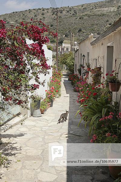 Cat Walking auf der Straße mit Topfpflanzen inmitten von Gebäuden