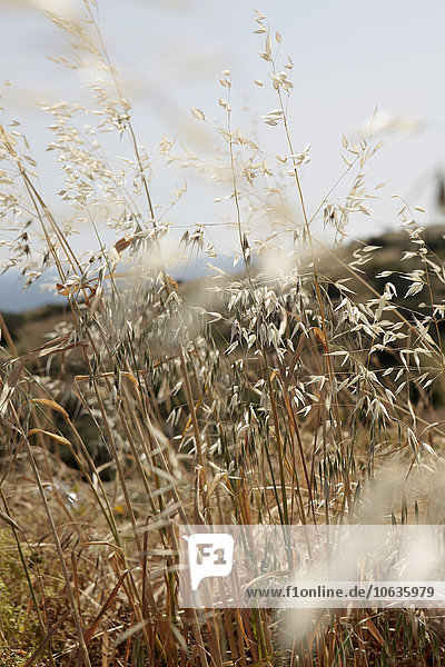 Nahaufnahme der auf dem Feld wachsenden Pflanzen