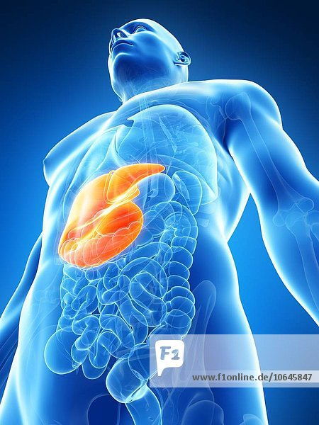 Human liver  artwork