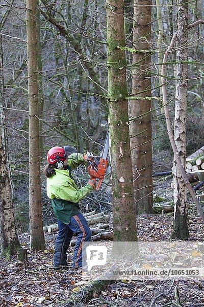 Ein Mann entfernt Zweige eines Nadelbaums mit einer Kettensäge  Briarwood Banks  Plankey Mill  Northumberland  England