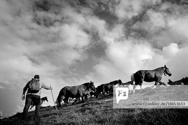 Berg halten Sommer bringen Dorf Veranstaltung Ausstellung grasen Oktober Pyrenäen
