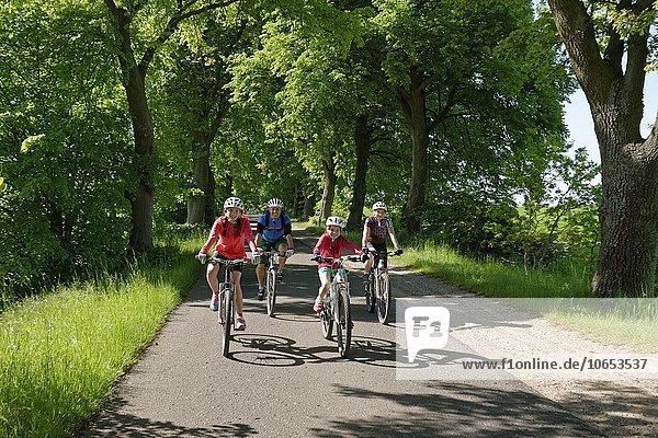 Familie mit Kindern beim Fahrrad fahren,  Fahrradtour in einer Allee bei Qualzow,  Müritz Nationalpark,  Mecklenburgische Seenplatte,  Mecklenburger Seenplatte,  Mecklenburg-Vorpommern,  Deutschland,  Europa