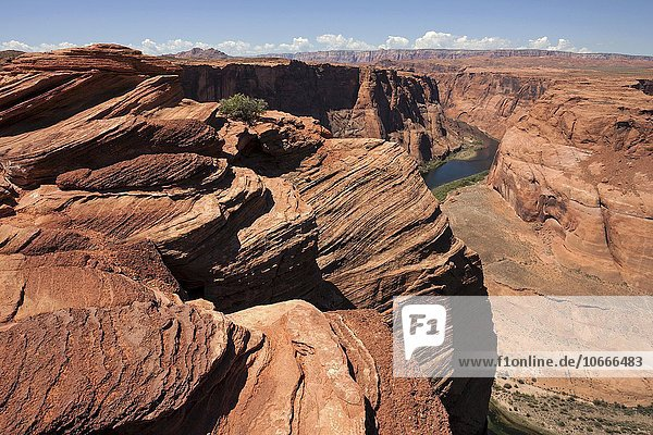 Erodierte Felsformationen am Horseshoe Bend  Page  Arizona  USA  Nordamerika
