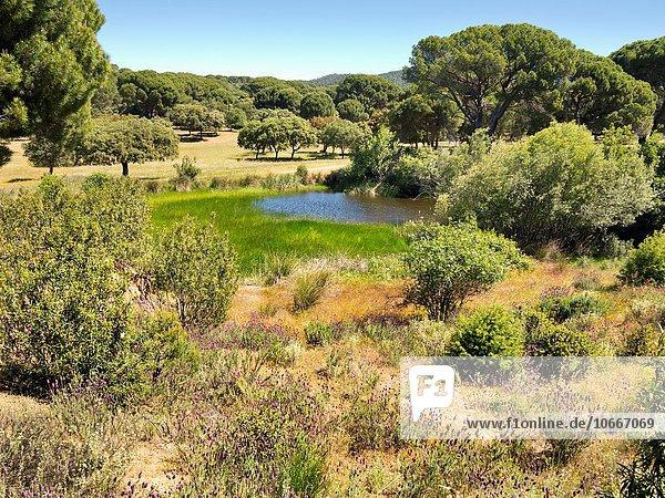 Madrid Hauptstadt Europa klein Lagune Spanien
