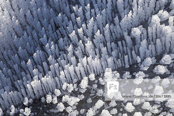 Eiskristalle  Raureif