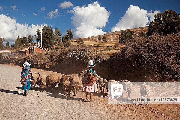 Frau Tal Herde Herdentier Heiligkeit Ethnisches Erscheinungsbild Peru Südamerika