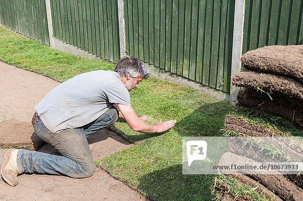 A man laying new grass garden turf lawn in a UK garden.