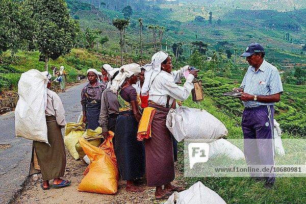 Frau warten Produktion Ziel Waage - Messgerät täglich Plantage Sri Lanka Tee