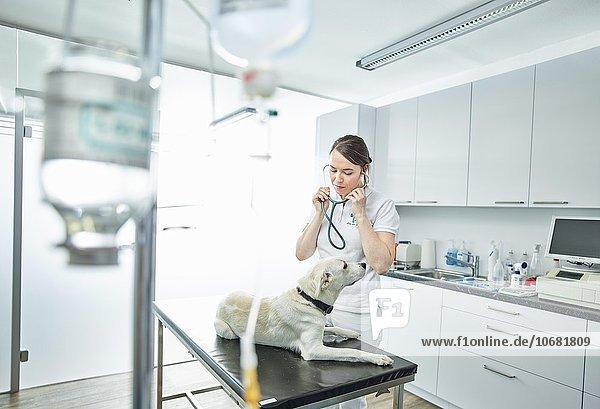 Tierärztin untersucht einen Hund in einer Tierarztpraxis  Österreich  Europa