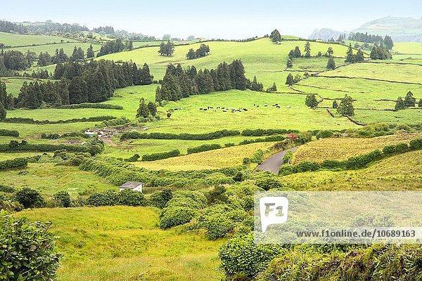 Landschaft Insel Azoren Portugal