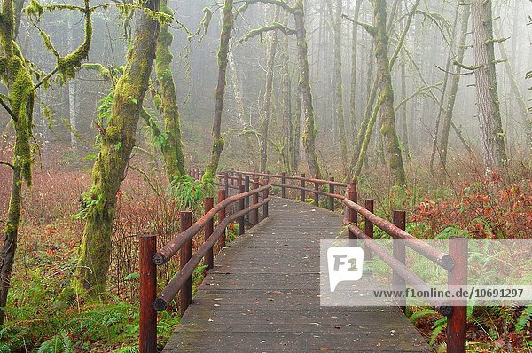 Plunkett Creek Loop Trail bridge  Beazell Memorial Forest County Park  Benton County  Oregon.
