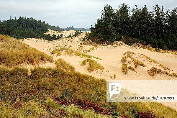 Felsen Küste Pazifischer Ozean Pazifik Stiller Ozean Großer Ozean Oregon