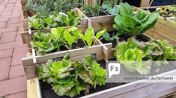 Küche Garten verkaufen Gartengeschäft Barcelona Spanien