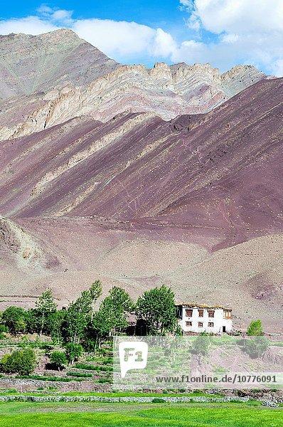 Tradition Wohnhaus Nutzpflanze Tal weiß Feld streichen streicht streichend anstreichen anstreichend umgeben Indien trekking