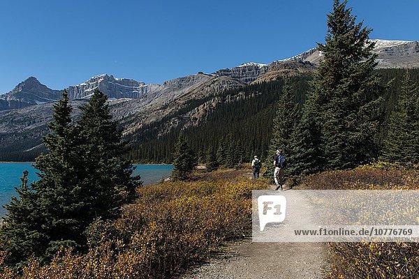 Wanderweg am Gletschersee Bow Lake  Banff Nationalpark  kanadische Rocky Mountains  Alberta  Kanada  Nordamerika