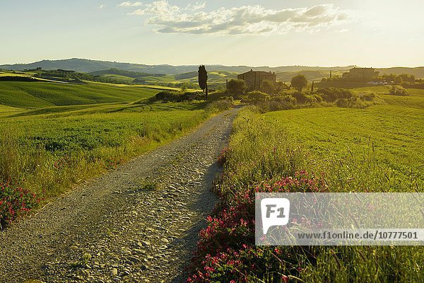 Landschaft mit Feldweg  bei Pienza  Val d'Orcia  Provinz Siena  Toskana  Italien  Europa