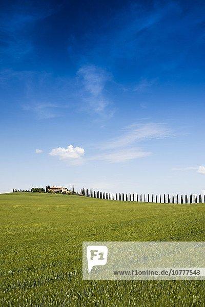 Landgut mit Zypressen  bei San Quirico d'Orcia  Val d'Orcia  Provinz Siena  Toskana  Italien  Europa