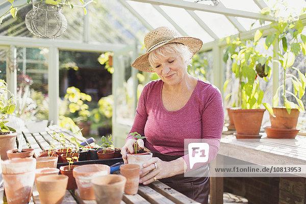 Seniorin Topfpflanzen im Gewächshaus
