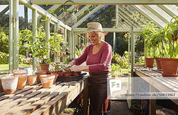 Seniorin Topfpflanzen im sonnigen Gewächshaus